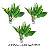 3-Bundles Hygrophila Corymbosa Siamensis | Dwarf Nomaphila Live Aquatic Water Aquarium Plants Decoration Freshwater Fish Tank by Greenpro