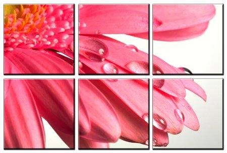 - Pink flower print on canvas, framed and ready to hang, modern home and office floral interior decor, flower canvas designs, 6 panel print, wall art