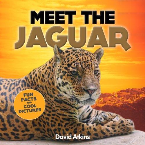 meet-the-jaguar-fun-facts-cool-pictures-meet-the-cats