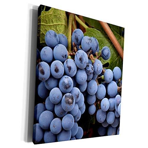 3dRose Danita Delimont - Vineyards - Argentina, Mendoza. Vineyard grapes - US24 BJA0033 - Jaynes Gallery - Museum Grade Canvas Wrap (cw_91361_1)