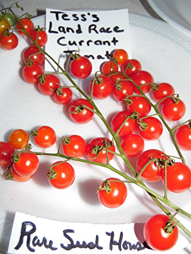 Tess's Land Race Currant Tomato Seeds