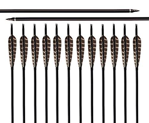 Archery Sharly 31