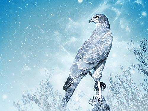 Home Comforts Canvas Print Falcon Bird Animal Scrapbooking Art Snow Raptor Vivid Imagery Stretched Canvas 32 x ()