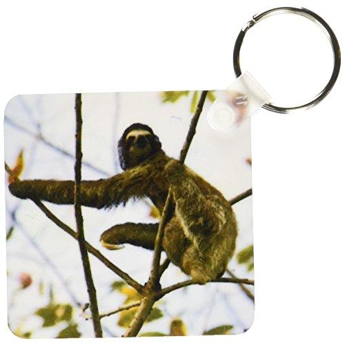 3Drose Three-Toed Sloth Bradypus Variegatus - Key Chains, 2.25 X 4.5 Inches, Set Of 2 (Kc_10379_1) -