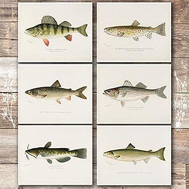 Fish Wall Art Prints (Set of 6) - Unframed - 8x10s   Vintage Fishing Decor