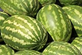 buy Dwqgroup Very Sweet Big Oval Seedless Watermelon Organic Seeds, Professional Pack, 20 Seeds / Pack, Edible Non-gmo Juicy 14% Sugar Melon now, new 2018-2017 bestseller, review and Photo, best price $9.99