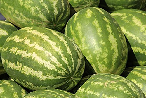 ADB Inc Watermelon Organic 20 Seeds Very Sweet Big Oval - Sweet Oval