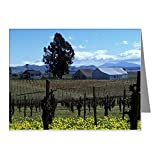 CafePress - Los Carneros Ava. St. Clair Note Cards (Pk of 20) - Blank Note Cards (Pack of 20) Glossy