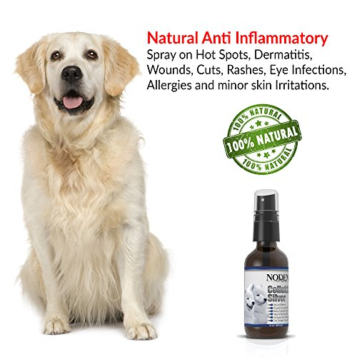 Colloidal-Silver-Spray-First-Aid-Disinfectant-Relief-for-Dog-Itch-All-Natural-Antiseptic-Antimicrobial-Wound-Healing-for-Pets-Antifungal-Skin-Care-Hot-Spots-Dermatitis-Skin-Infections
