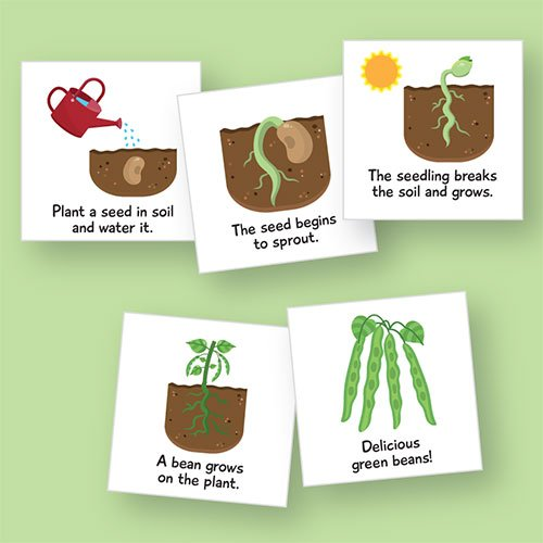 Primary Concepts AA2029 Life Cycle: Plant Magnetic Whiteboard Graphic (Life Cycle Of A Bean Plant For Kids)