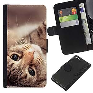 Stuss Case / Funda Carcasa PU de Cuero - Maine Coon Cat American Shorthair - Apple Iphone 5C