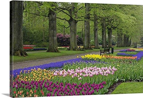 Adam Jones Premium Thick-Wrap Canvas Wall Art Print entitled Garden of daffodils, tulips, and hyacinth flowers, Keukenhof Gardens, Lisse, Netherlands 48