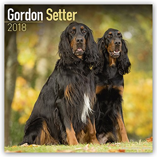 Gordon Setter Calendar - Dog Breed Calendars - 2017 - 2018 wall Calendars - 16 Month by Avonside