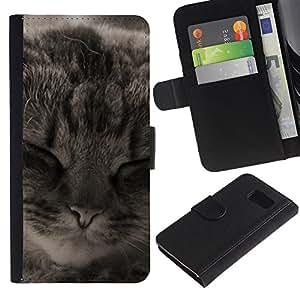 eJoy---La carpeta del tirón la caja de cuero de alta calidad de la PU Caso protector - Samsung Galaxy S6 - --Manx American Shorthair Cat Sleeping