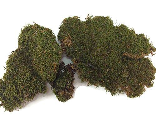 [Fake Moss Plant Algae Thallophytic Plant Lichen Green Jardiniere Growing Plant Pot Flower Handmade] (Diy Tree Frog Costume)