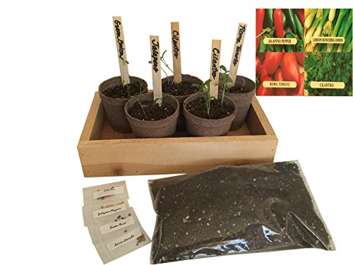 Salsa Growing Kit - Grow Your Salsa from Seed - Our Growing Starter Set Contains Everything You Need to Grow Salsa - Planting Pots, Seeds, Plant Labels, Soil & Instructions. (Natural-Cedar)