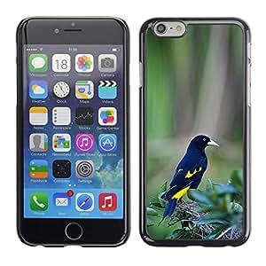 Las plumas de pájaro amarillo negro verde tropical- Metal de aluminio y de plástico duro Caja del teléfono - Negro - Apple (5.5 inches!!!) iPhone 6+ Plus / 6S+ Plus