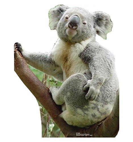 Koala Bear - Advanced Graphics Life Size Cardboard Standup