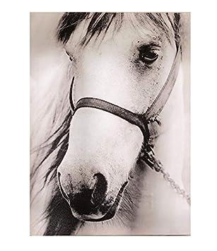 Gift Craft Framed Canvas Prints, Haltered Horse