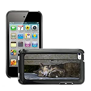 Hot Style Cell Phone PC Hard Case Cover // M00129307 Cat Pet Asleep Bench Adorable Kitty // Apple ipod Touch 4 4G 4th