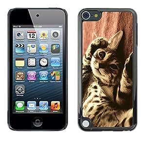 Vortex Accessory Carcasa Protectora Para Apple Ipod Touch 5 - Bengal Serengeti Ocicat Savannah Cat -