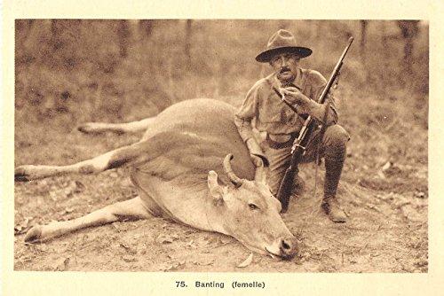 Vietnam Banting Water Buffalo Man Rifle Hunting Antique Postcard J28003