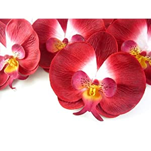 "(50) Red Phalaenopsis Orchid Silk Flower Heads - 3.75"" - Artificial Flowers Heads Fabric Floral Supplies Wholesale Lot for Wedding Flowers Accessories Make Bridal Hair Clips Headbands Dress 42"