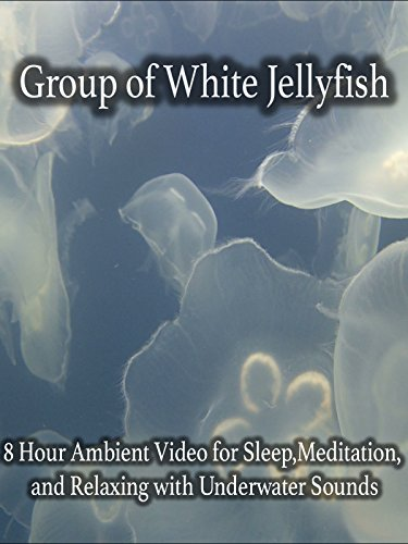 Group of White Jellyfish 8 Hour Ambient Video for Sleep,Meditation, and Relaxing with Underwater Sounds (Jellyfish Video)