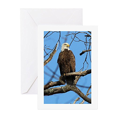 - CafePress - Bald Eagle On Guard Greeting Cards - Greeting Card, Note Card, Birthday Card, Blank Inside Matte