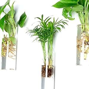 newdreamworld 'a juego de 3pared jarrón de vidrio jarrón de pared diseño de terrarios de cristal cilíndrico de////Uso en interiores raíces, listo para plantas pared//Flores secas