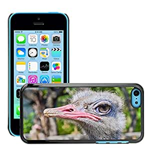 GoGoMobile Etui Housse Coque de Protection Cover Rigide pour // M00119304 Avestruz Zoo Nuevos Pájaros Naturaleza // Apple iPhone 5C