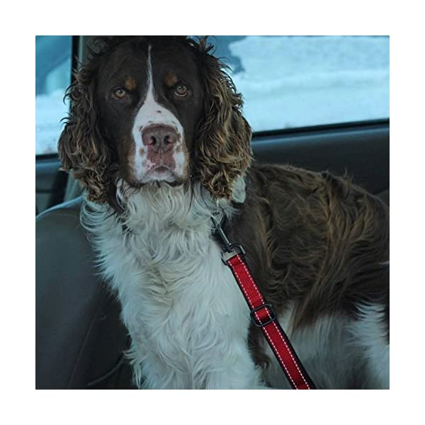 (Hook To Latch Bar, L) – PetsLovers Durable Dog Seatbelt – Heavy Duty Strap, Reflective Lines, 2 Adjustable Sizes (38cm… Click on image for further info. 6