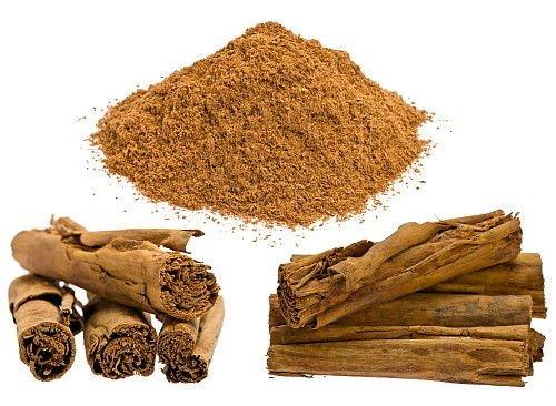 Ceylon Cinnamon Tree - Cinnamomum verum - Tropical/Patio/Indoors/Bonsai - 6'' Pot by Hirt's Gardens