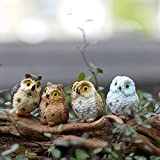 SNNplapla Diy Miniature Owl - Chic Garden Moss Terrarium Desktop Decor Crafts Bonsai Animals