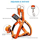 "URPOWER Dog Harness Durable dog Leash Heavy Duty & Adjustable Dog Collar Anti-Twist Dog Leash Harness for Small Medium & Large Dogs Perfect for Walking Running Training (L (17""-27.5"" Chest Girth))"