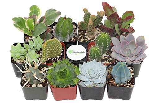 shop-succulents-cactus-and-succulent-collection-of-12