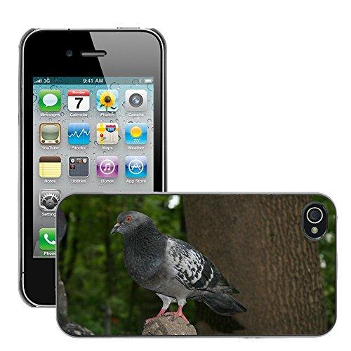 Bild Hart Handy Schwarz Schutz Case Cover Schale Etui // M00134949 Dove Vogel Flügel // Apple iPhone 4 4S 4G