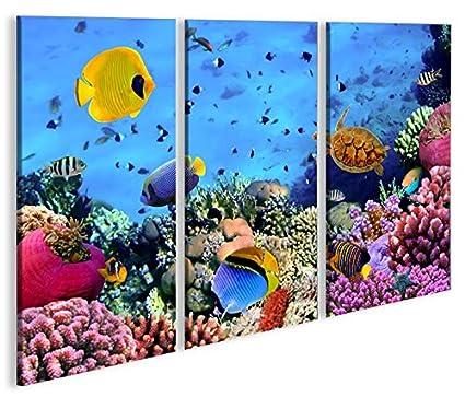 De Imágenes sobre lienzo Acuario Peces Mar Agua Doktor peces tropicales 3P XXL Póster Lienzo Cuadro