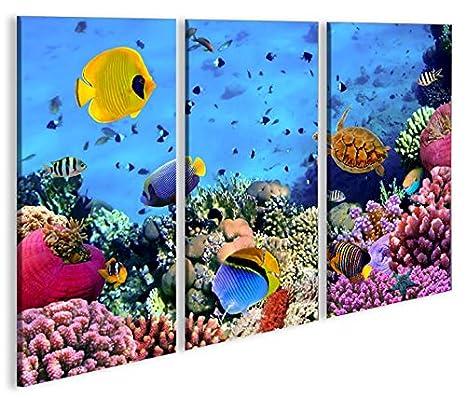 De Imágenes sobre lienzo Acuario Peces Mar Agua Doktor peces tropicales 3P XXL Póster Lienzo Cuadro de decoración salón Marca Islandburner: Amazon.es: Hogar