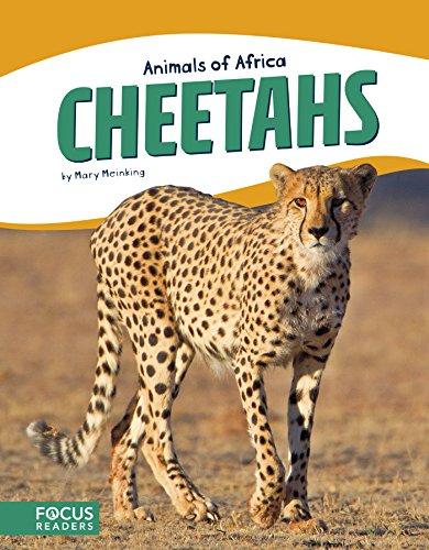 Cheetahs (Animals of Africa)