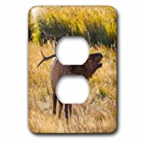 3dRose Danita Delimont - Elk - USA, Colorado, Rocky Mountain NP. Male elk bugling in grassland. - Light Switch Covers - 2 plug outlet cover (lsp_278745_6)