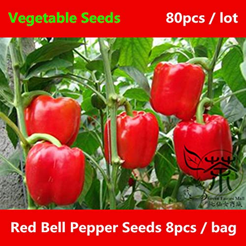 Shopvise Rich in Vitamin C Red Bell Pepper 80Pcs, Annual Solanaceae Plant of Sweet Pepper Vegetable, Thick Red Pepper