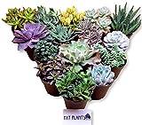 Fat Plants San Diego Large Succulent Plant Collection