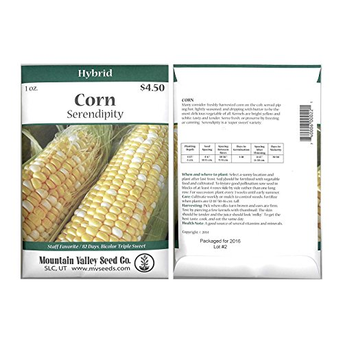 Serendipity Hybrid Triplesweet Corn Garden Seeds - 1 Oz Packet - Non-GMO Vegetable Gardening Seeds - Bicolor Triple Sweet Corn