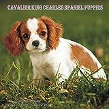 Cavalier King Charles Spaniel Puppies Calendar - 2016 Wall calendars - Dog Calendars - Monthly Wall Calendar by Magnum