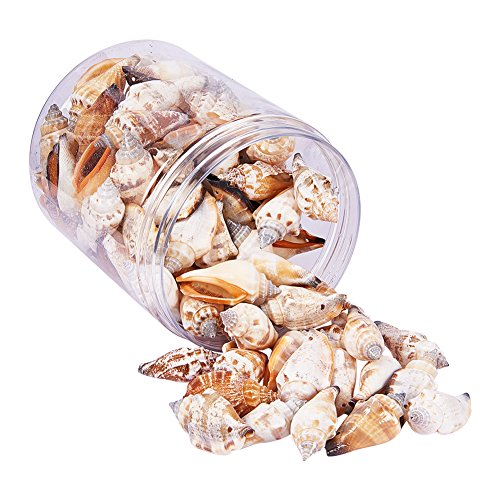 PandaHall Elite 1Box About 95-100Pcs Spiral Seashells Dyed Beads and Charms with Holes for Craft Making 41-50mm Length