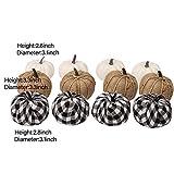 winemana Set of 12 Assorted Pumpkin