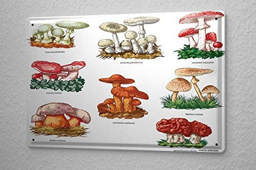 - Metal Sign Flower Shop Mushrooms 8X12