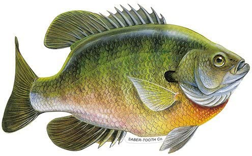 Crappie Large Decal Sticker Right Left Facing Boats Trucks Fishing Fish