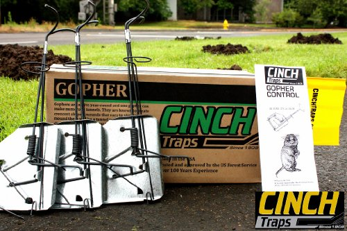 System 2 Flag (Cinch Traps-Medium Gopher Trap Kit: 2 Gopher Traps with Tunnel Marking Flags and Instructions- Made in America)